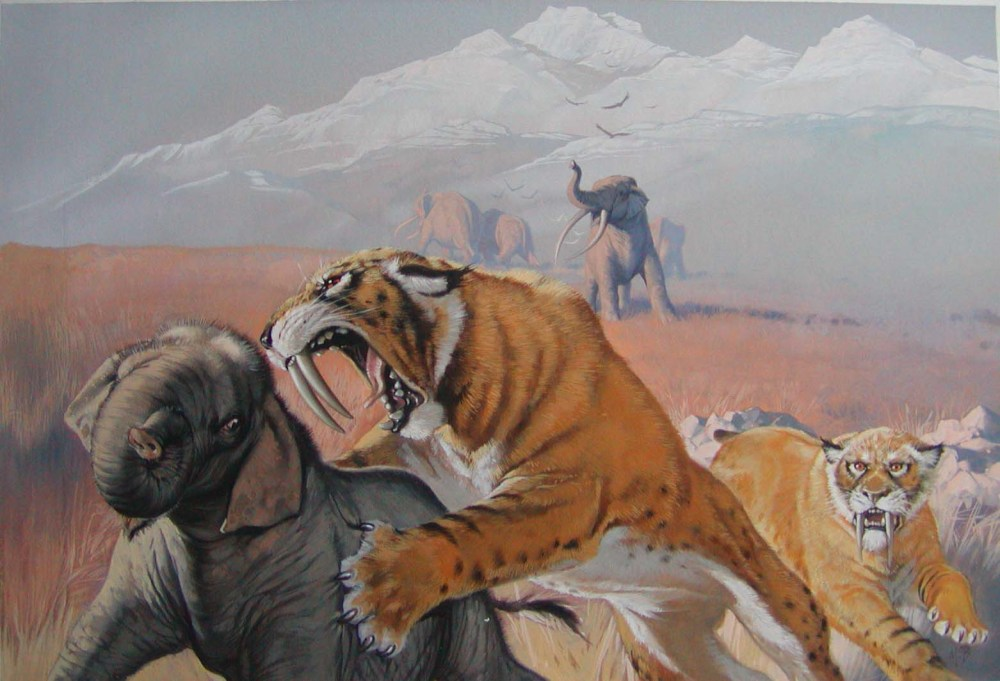 medium resolution of climate change sabre tooth tigers and devaluing the future