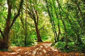 Camolin-woods