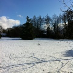 Snow front lawn