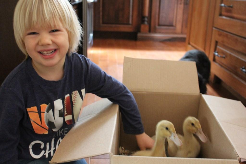 Bringing home ducks