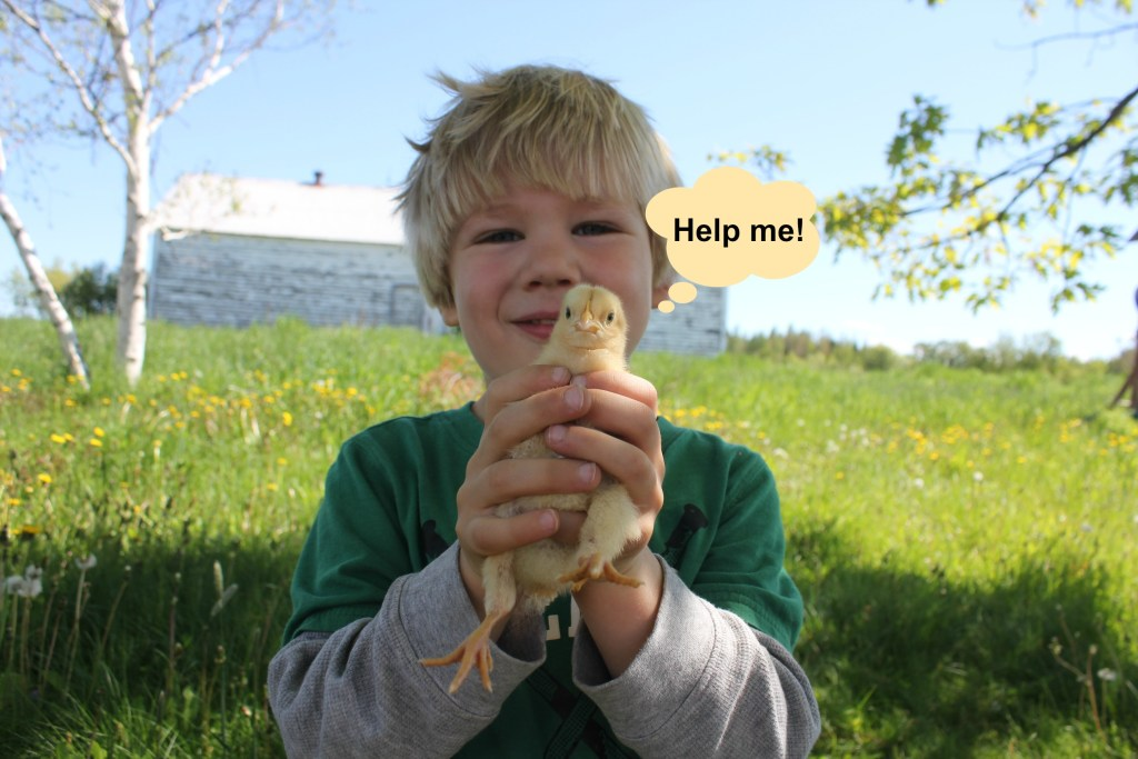 Child holding chick outside