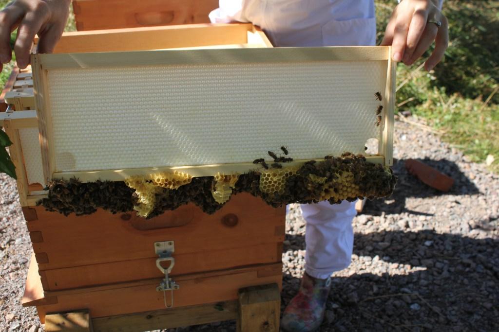 Beekeeping mistake