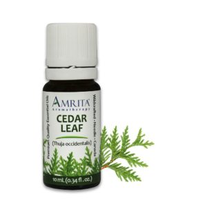Amrita Essential Oil Cedar Leaf - EO-10mL at The OM Shoppe in Sarasota, FL