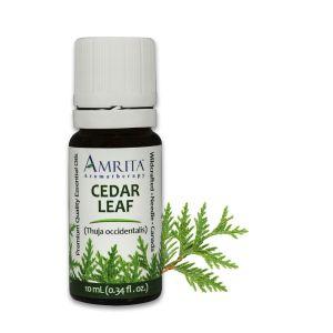 Amrita Essential Oil Cedar Leaf - EO-10mL at The OM Shoppe in Sarasota, FL