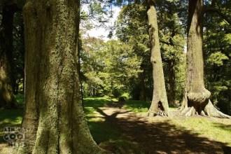 HobbitTrees