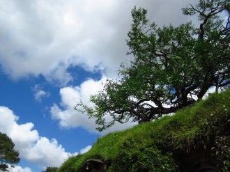 The tree atop the hill