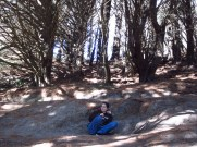 Hiding from the Nazgul... and my fellow tourists! (The tree in the film was fake)