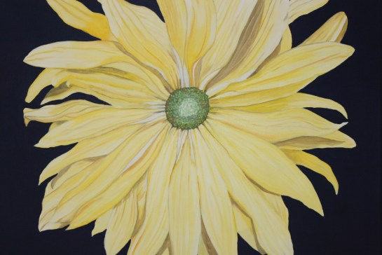 Yellow Daisy (6)