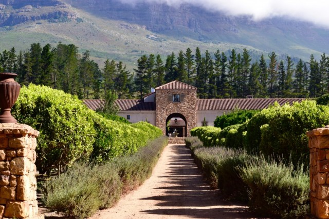 Driveway flanked by foliage at Waterford Estate in Stellenbosch, offering South Africa wine tours