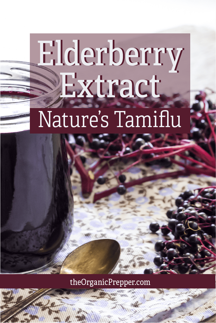 "Elderberry Extract for the Flu: Nature's ""Tamiflu"""