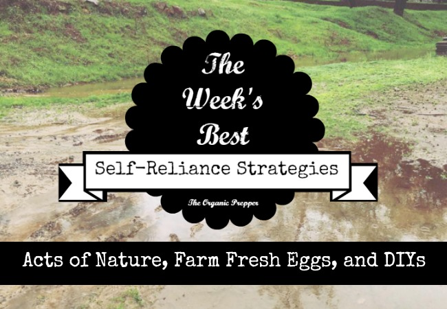 `The Self-Reliance Weekly Report: Acts of Nature, Farm Fresh Eggs, and DIYs