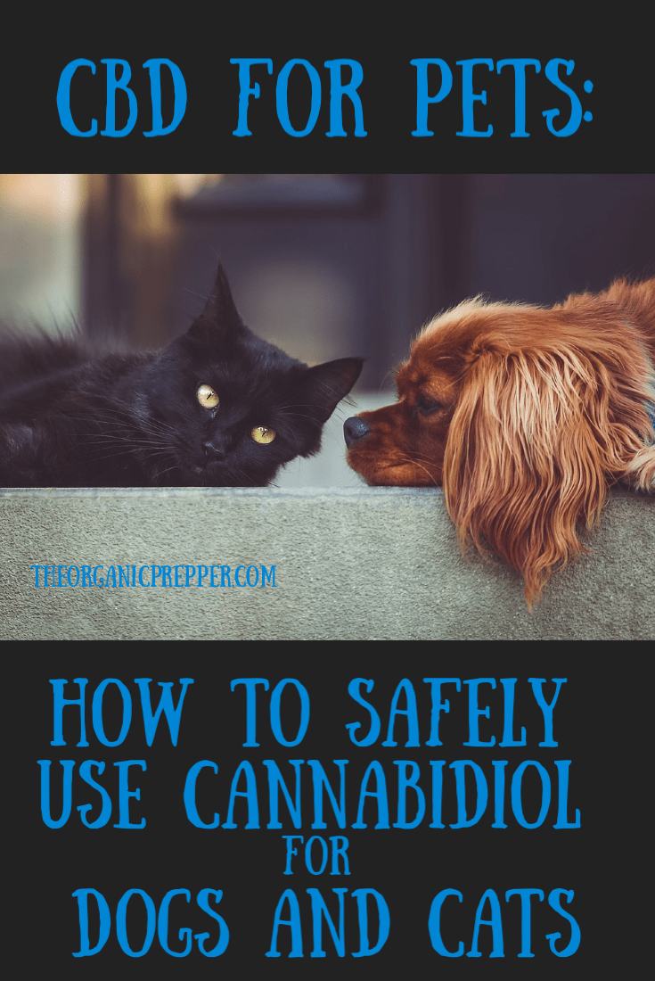 Did you know that CBD can be safely used for your pets? Learn more about it with this guide to CBD products for dogs and cats.| The Organic Prepper