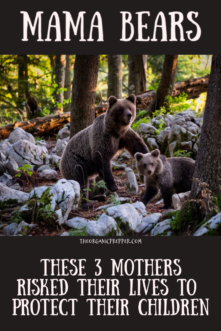 Our Lives Are In Danger Mother With >> 3 Mothers Risked It All To Protect Their Children The Organic Prepper