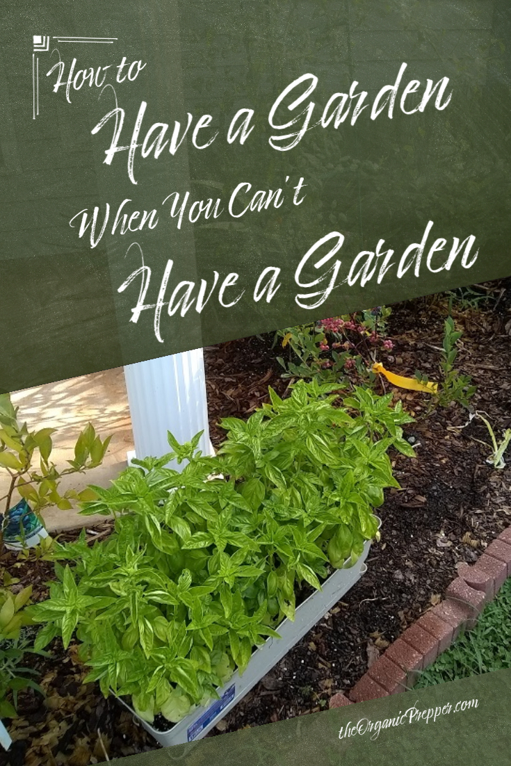 How to Have a Garden When You \