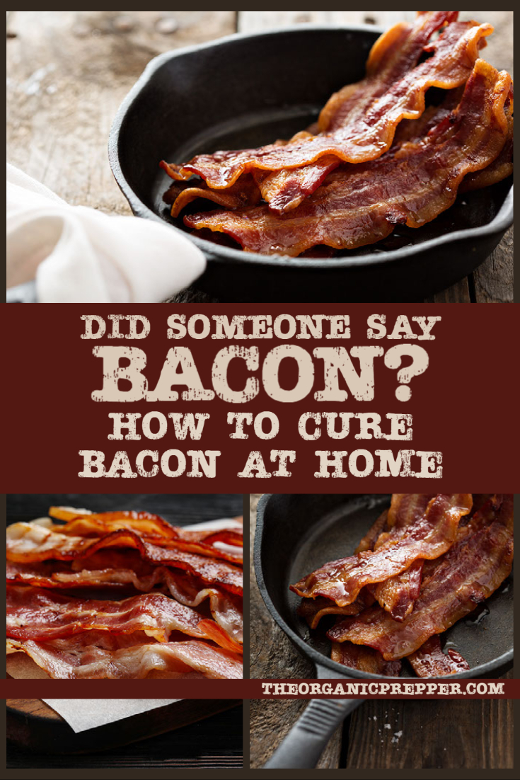 Did Somebody Say Bacon? How to Cure Bacon at Home