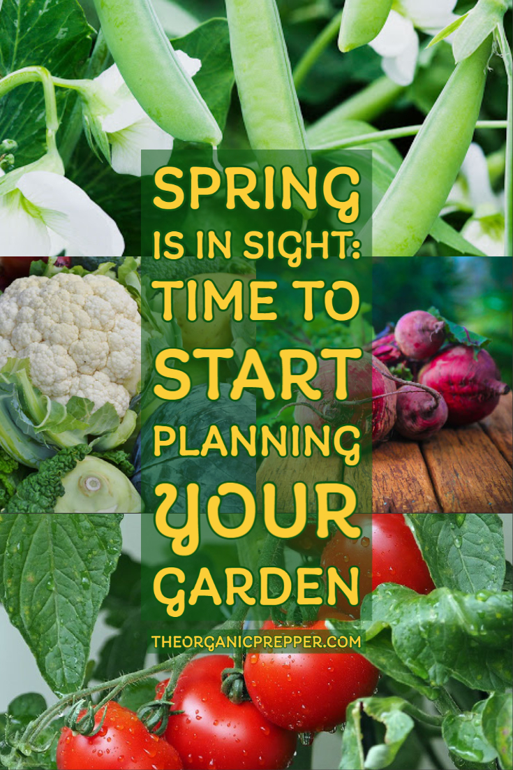 Growing Vegetables Is Back in Style: Here\'s How to Start Planning Your Garden