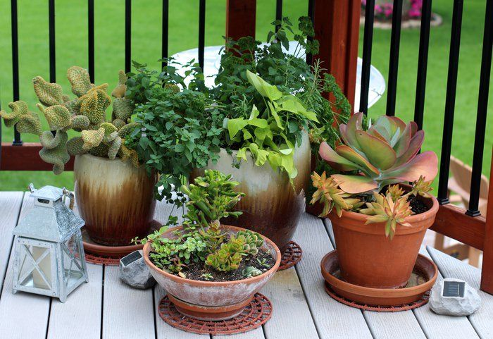 Setting Up A Patio - Cactus Deck
