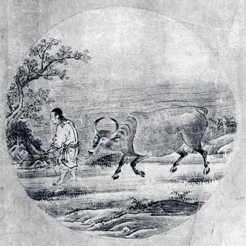 Ox-herding picture 5