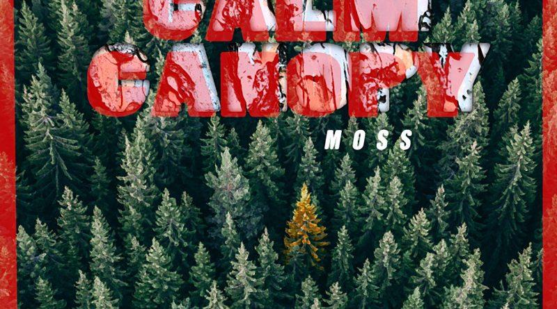 calm canopy moss