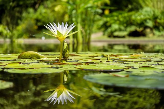 How to get rid of pond algae