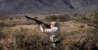 High Volume Dove Shooting