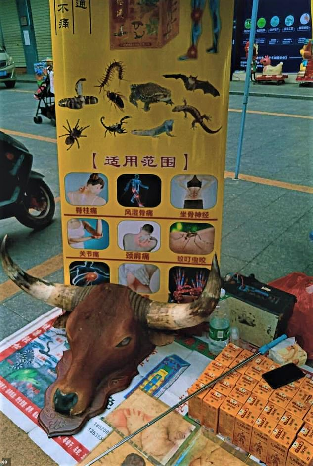 A Traditional Chinese Medicine Stall in Dongguan advertising bats, spiders and other unsafe wildlife