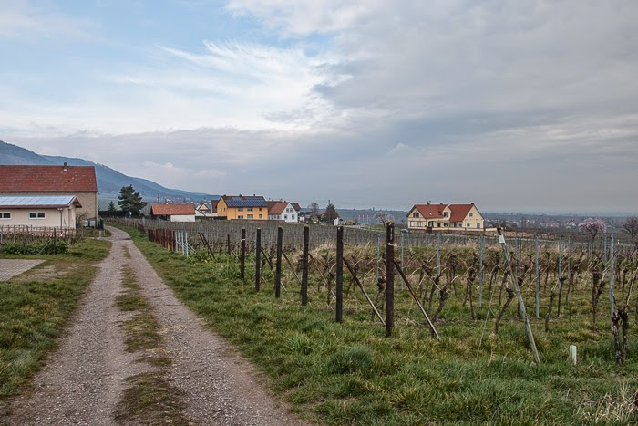 Wine-Country-1-2