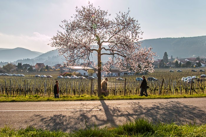 Wine-Country-1