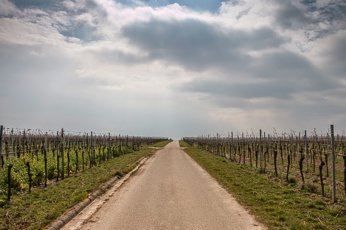 Wine-Country-9