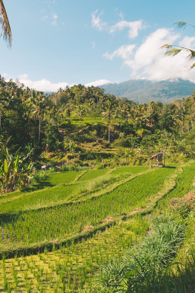 New Bali Tours - The Overseas Escape-18