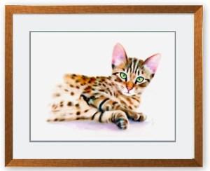 Bengal Kitten Framed