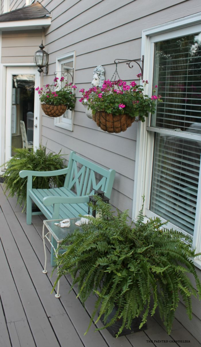 geraniums-back-porch-with-ferns
