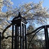M12– Morris Arboretum of the University of Pennsylvania
