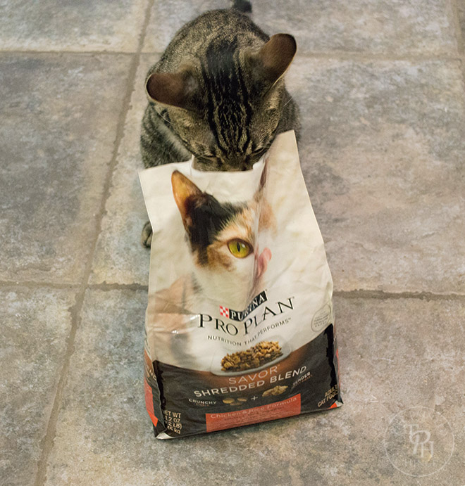 How To Keep Your Cats Healthy and Happy