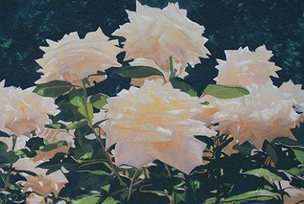 white_roses_Afic