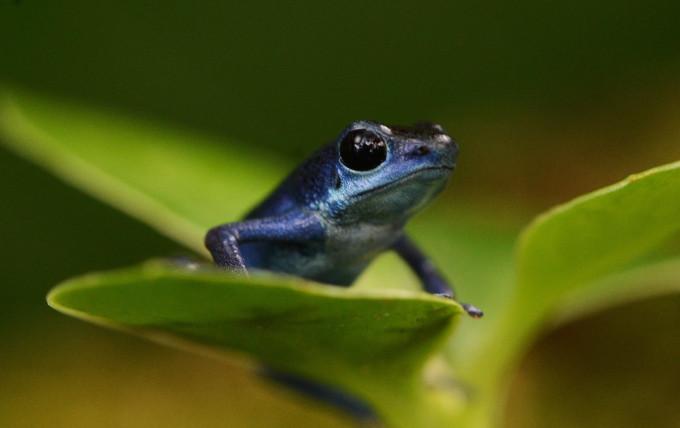 LH blue 1