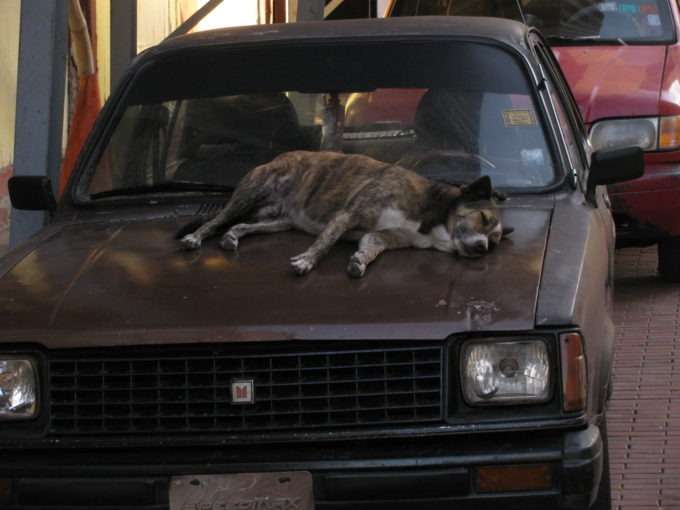 sleeping on a car