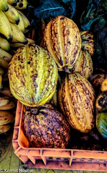 KN cacao