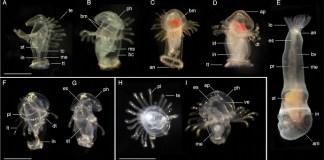 plankton sm