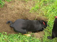 Dog-Digging