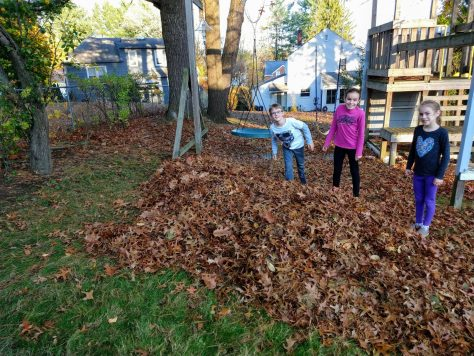 Fall leaf pile upstate NY
