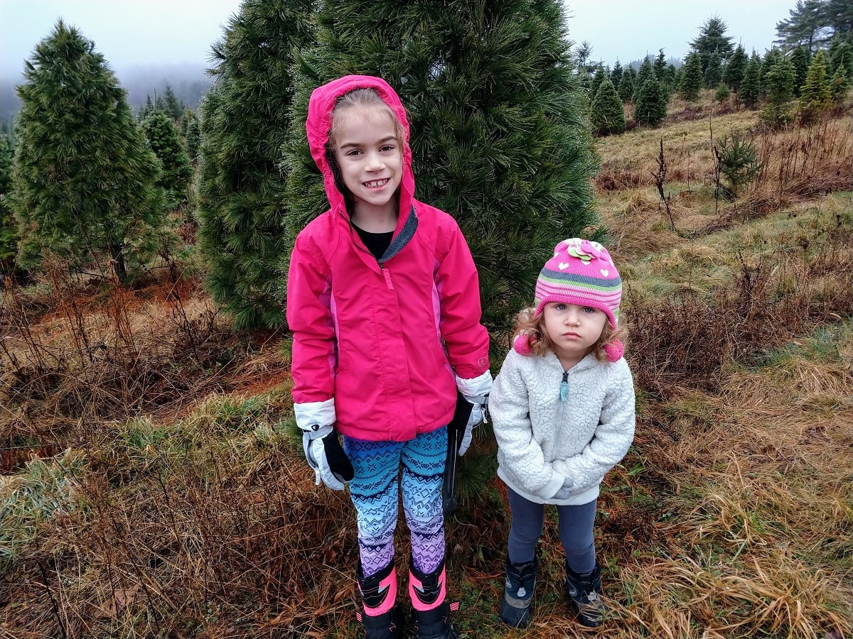 Cutting Christmas Tree