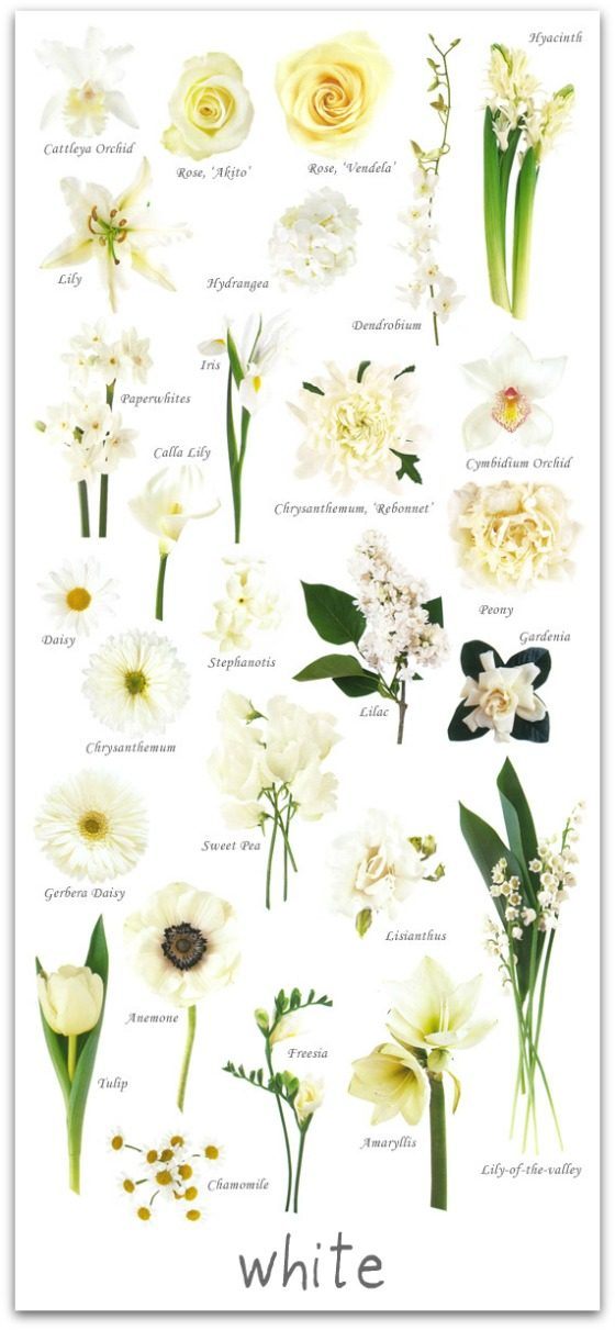 A Glossary of Flowers  The Peak Xperience