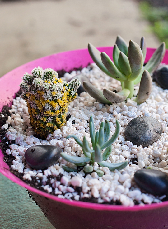 Make Your Own Succulent Garden!