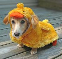 The Accidental Duck Blog   Threadless