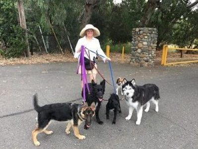 Michelle with five dogs going to the park