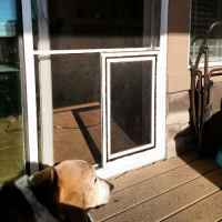 Sliding glass patio dog doors in Denver and the front ...