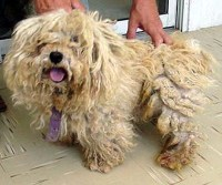 A dogs bad hair day | The Pet Product Guru