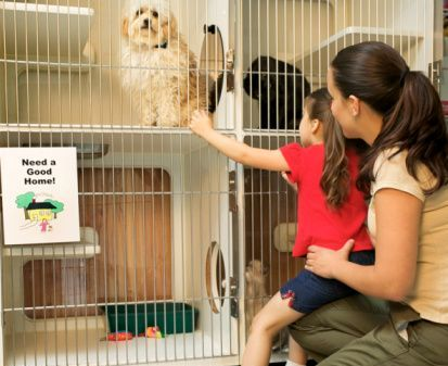 Why Should You Get A Pet From Pet Adoption Centers? - The Pets Central