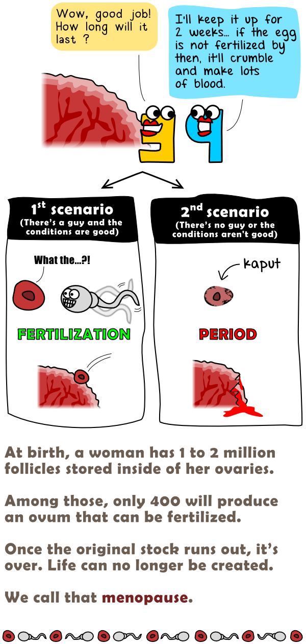 Fertilization or period